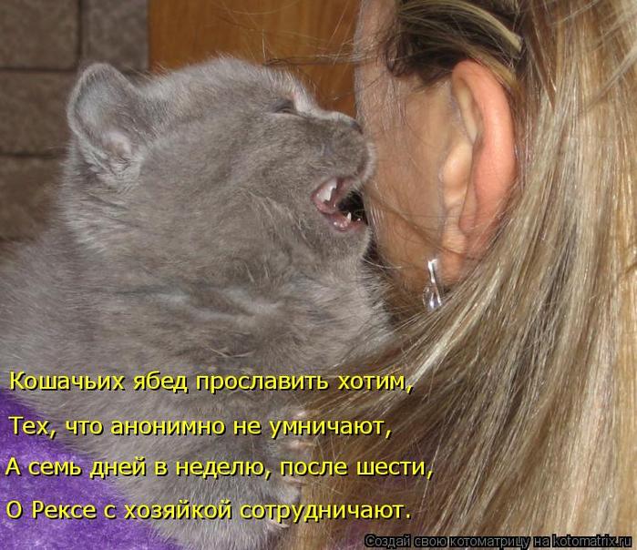 kotomatritsa_kT (700x604, 445Kb)