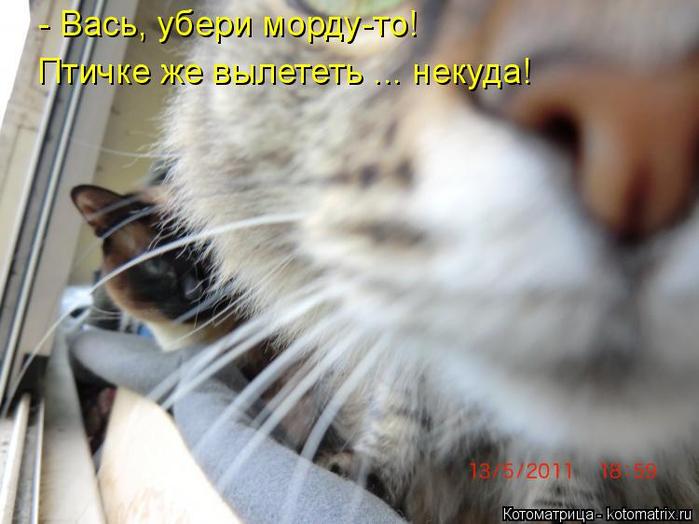 kotomatritsa_Ug (700x524, 303Kb)