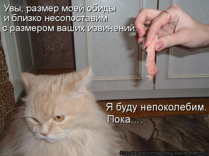 kotomatritsa_l (700x524, 302Kb)