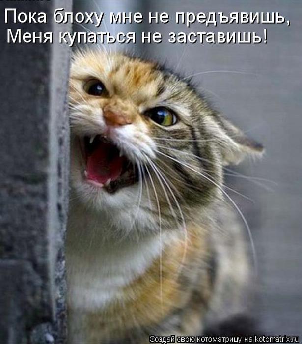 kotomatritsa_r (615x700, 314Kb)