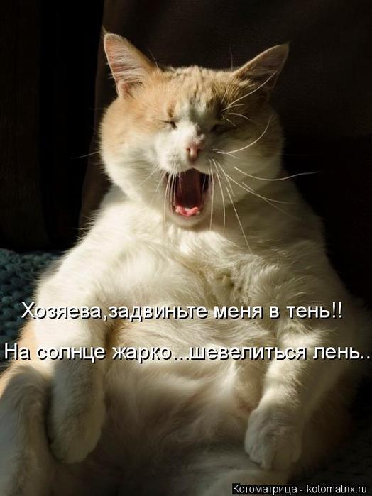 kotomatritsa_S8 (524x700, 258Kb)