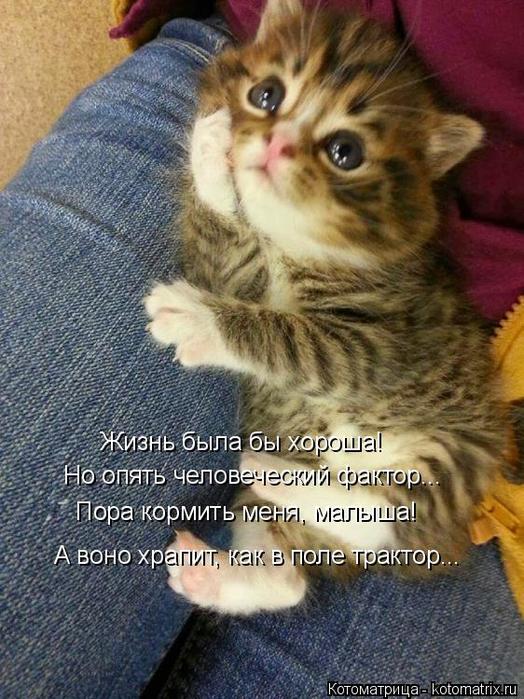 kotomatritsa_5 (524x700, 416Kb)