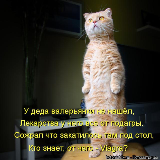 kotomatritsa_k (640x640, 239Kb)