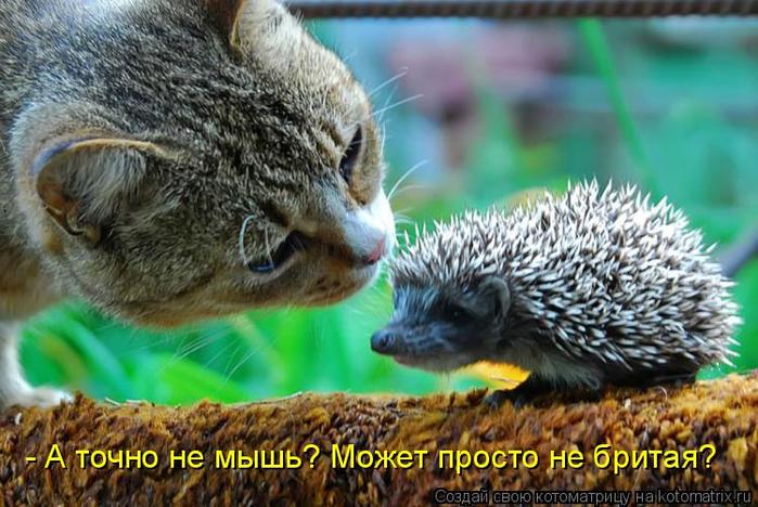 kotomatritsa_n (700x468, 390Kb)