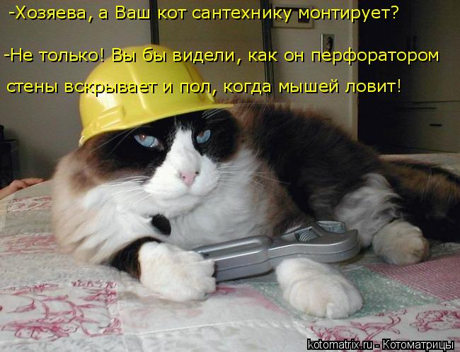 kotomatritsa_3 (650x498, 233Kb)