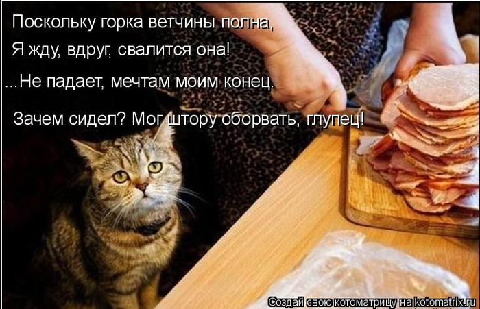 kotomatritsa_H (700x451, 322Kb)
