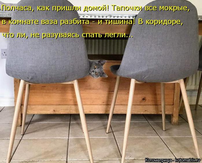 kotomatritsa_R (700x564, 392Kb)