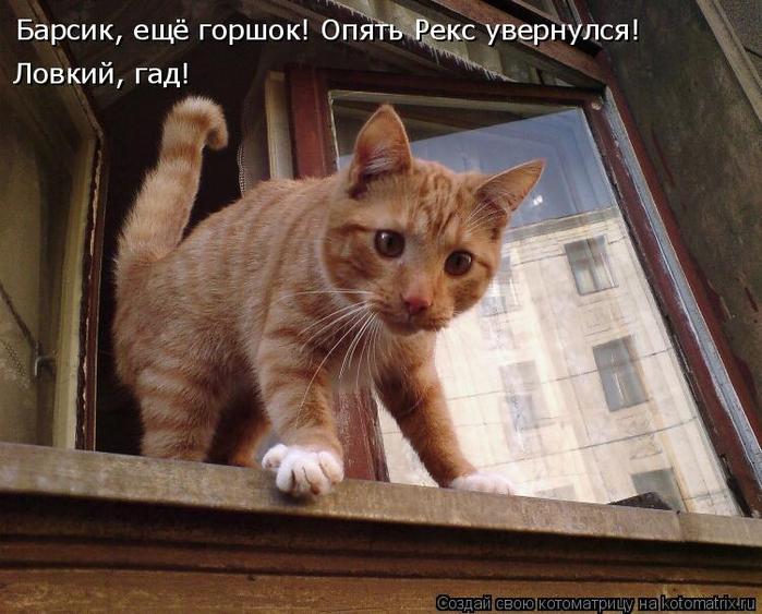 kotomatritsa_u (700x563, 394Kb)