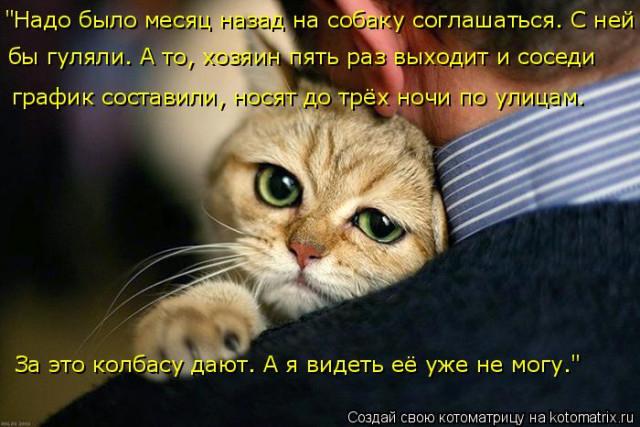 1586540464_kotomatrica-1 (640x427, 211Kb)