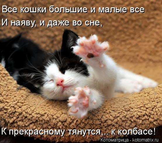 1588361585_kotomatrica-1 (554x489, 200Kb)