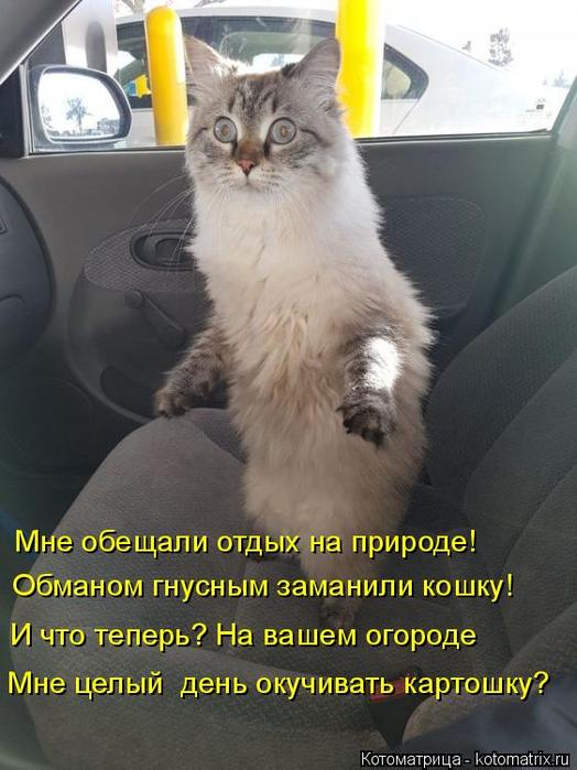 kotomatritsa_A (1) (524x700, 332Kb)