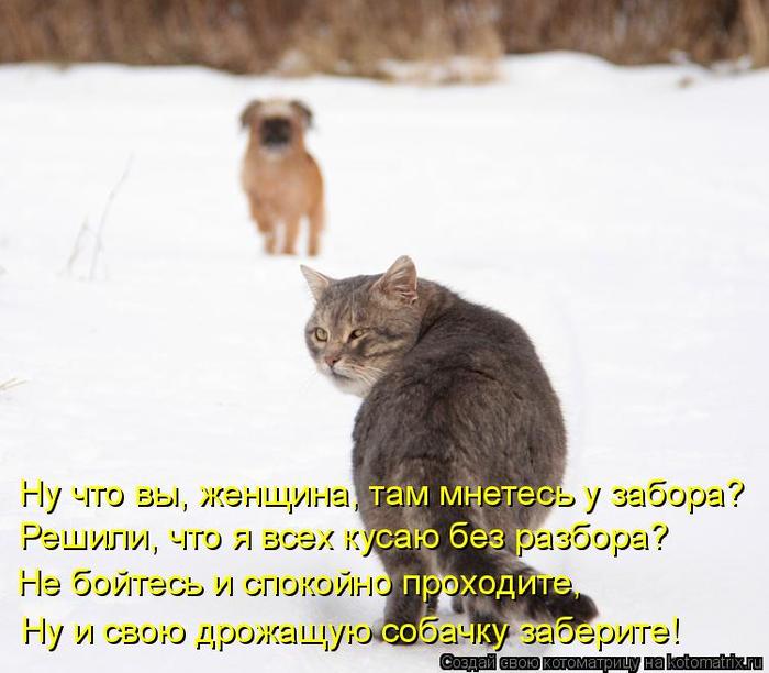 kotomatritsa_0r (700x612, 313Kb)