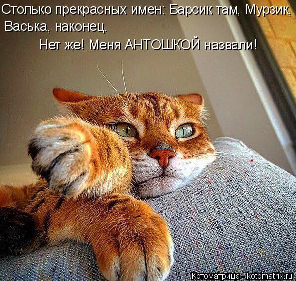 kotomatritsa_q (1) (597x566, 367Kb)