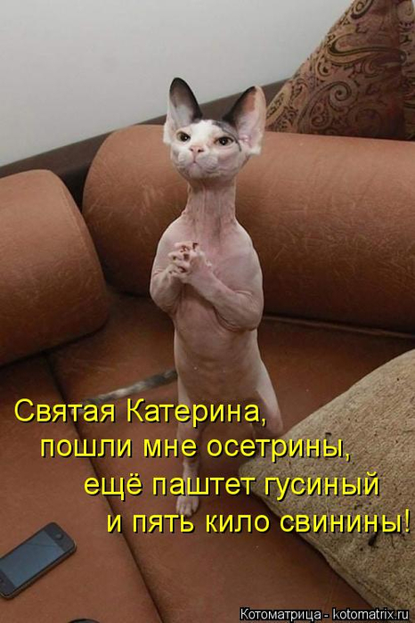 kotomatritsa_R (466x700, 289Kb)