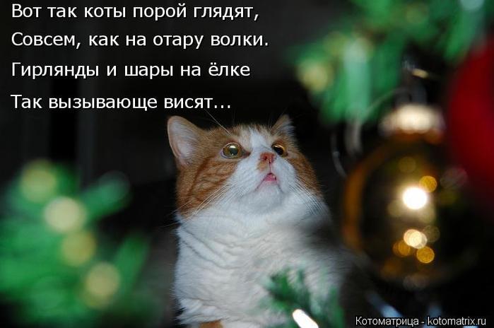 kotomatritsa_U (1) (700x464, 231Kb)