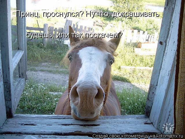 kotomatritsa_d (640x480, 309Kb)