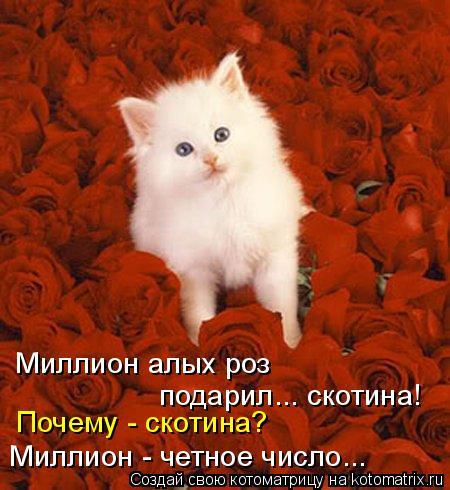 kotomatritsa_i (450x490, 230Kb)