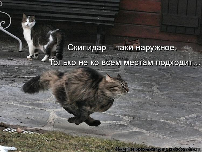 kotomatritsa_p (700x524, 310Kb)