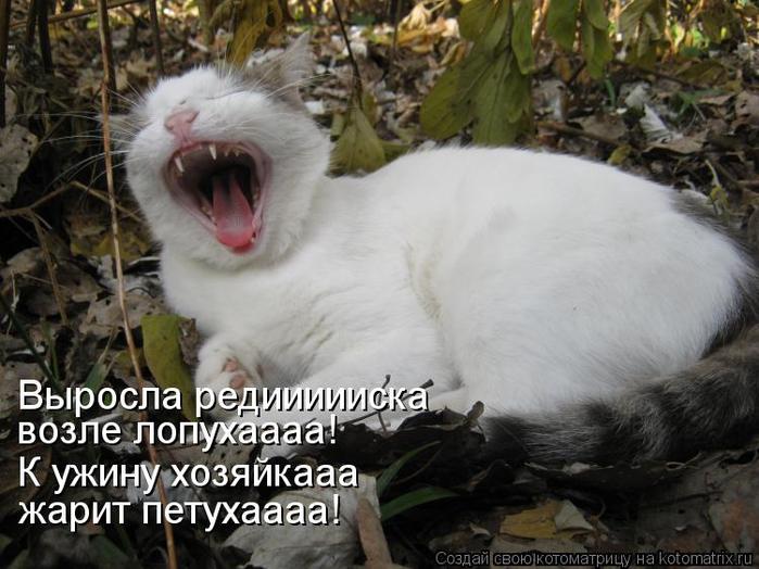 kotomatritsa_U (700x524, 331Kb)