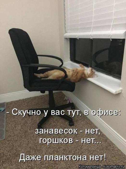 kotomatritsa_v (524x700, 267Kb)