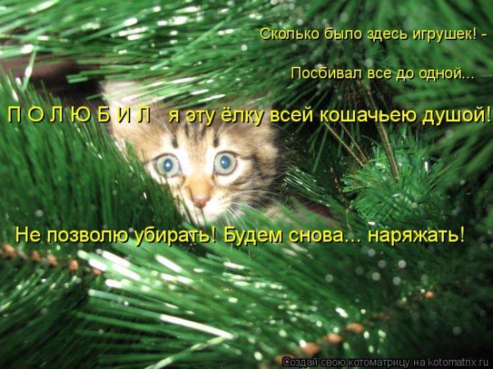 1358816250_smeshnye-i-uboynye-kotomatricy-38 (700x524, 341Kb)
