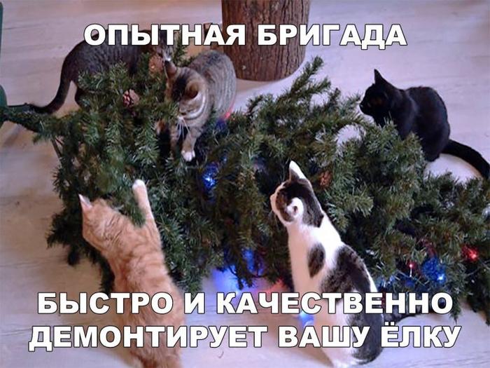 cats-768x576 (700x525, 389Kb)