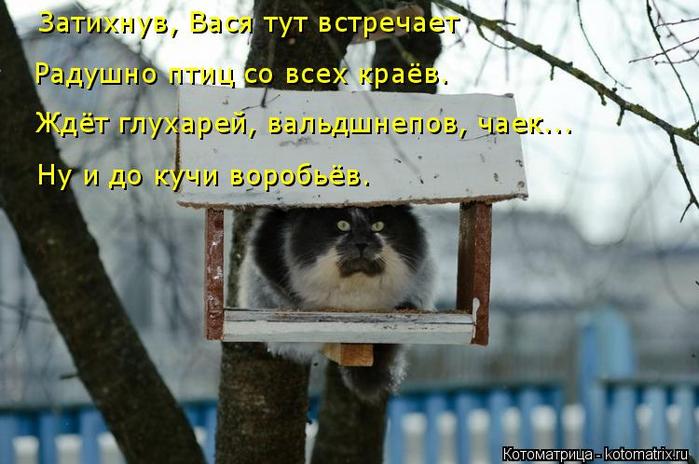 kotomatritsa_F (700x464, 325Kb)