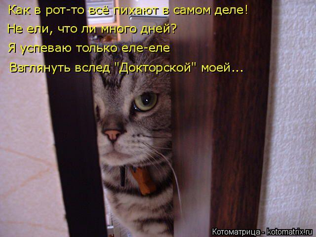 kotomatritsa_sH (640x480, 232Kb)