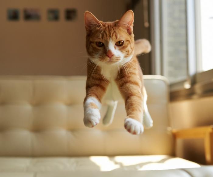 Cat-Jump-960x800 (700x583, 254Kb)