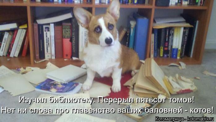 kotomatritsa_0 (700x393, 268Kb)