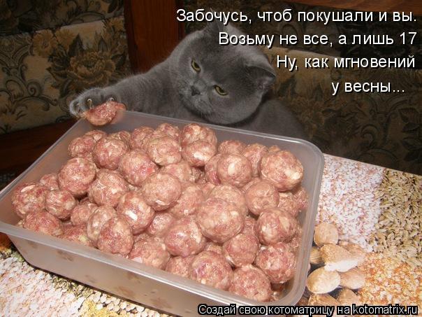 kotomatritsa_1w (604x453, 239Kb)