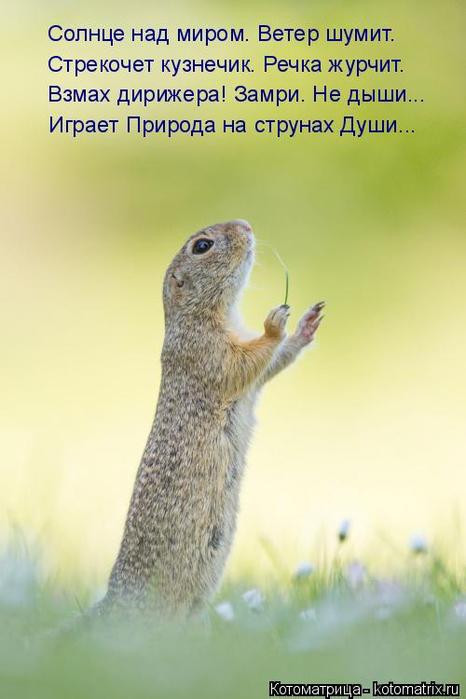 kotomatritsa_a (466x700, 229Kb)