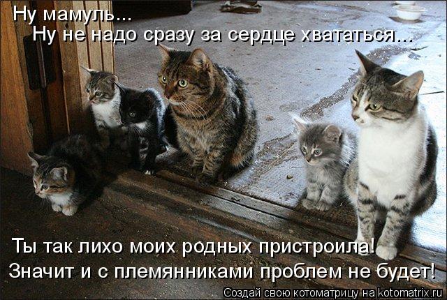 kotomatritsa_fQ (640x430, 268Kb)