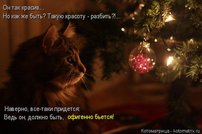 kotomatritsa_g (699x466, 227Kb)