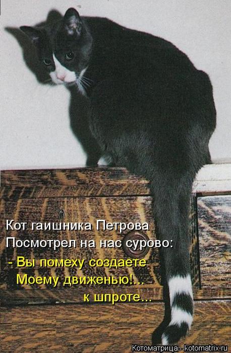 kotomatritsa_z (458x700, 349Kb)