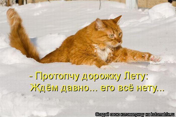 kotomatritsa_5U (700x467, 203Kb)