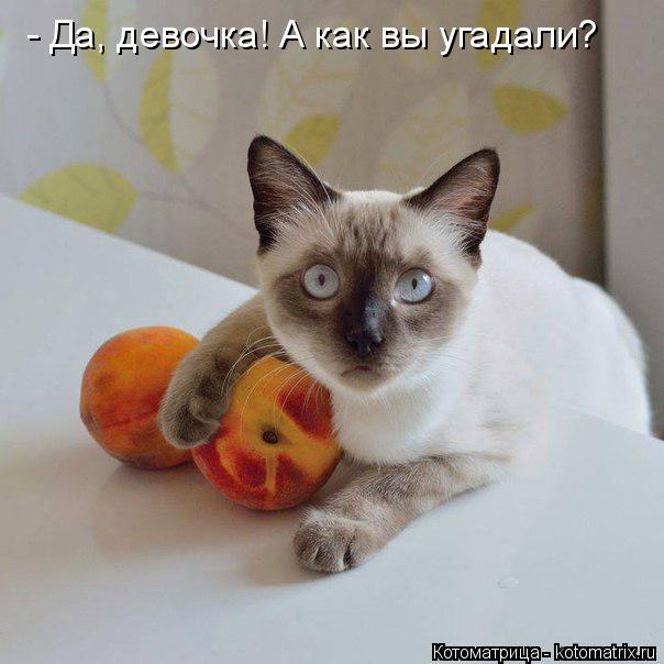kotomatritsa_b6 (604x604, 187Kb)