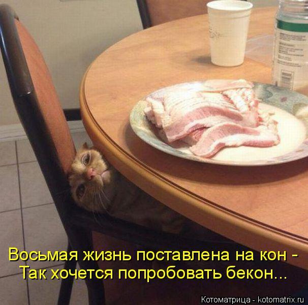 kotomatritsa_Di (606x600, 256Kb)