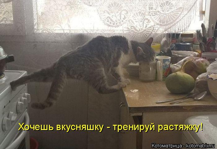 kotomatritsa_n (700x480, 197Kb)