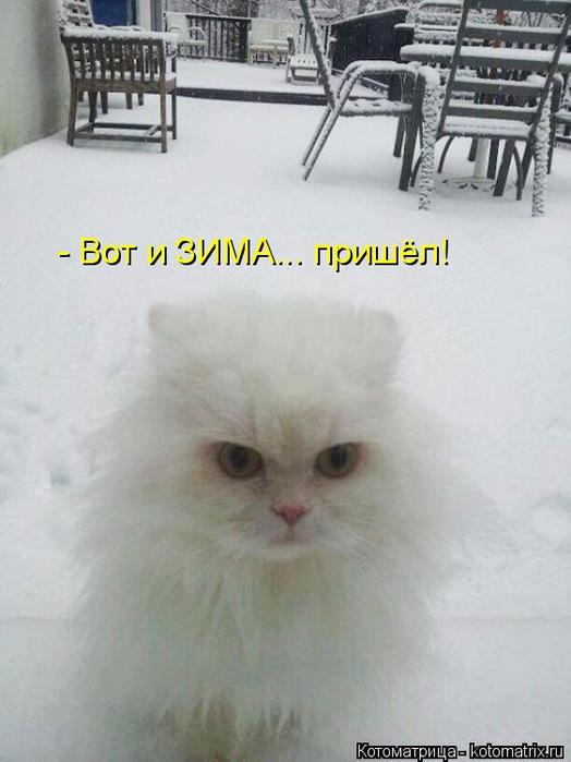kotomatritsa_P (524x700, 237Kb)