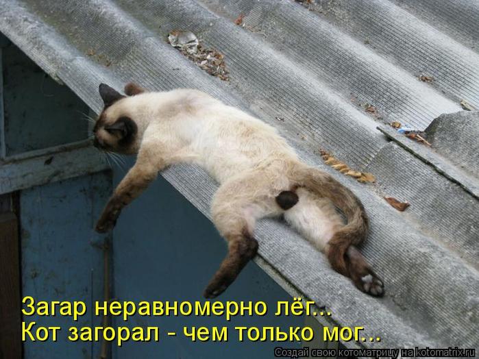 kotomatritsa_Yl (700x524, 364Kb)