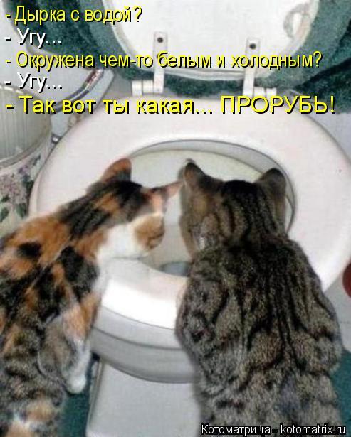 kotomatritsa_Z (493x615, 211Kb)