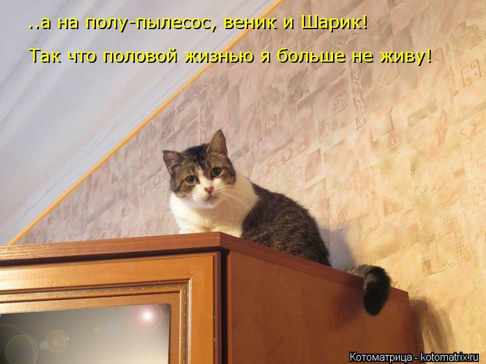 kotomatritsa_4K (700x524, 348Kb)