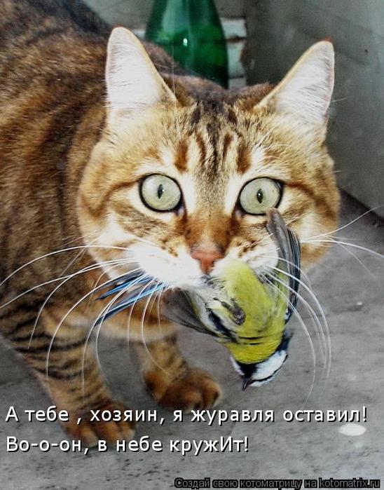 kotomatritsa_HS (548x700, 393Kb)