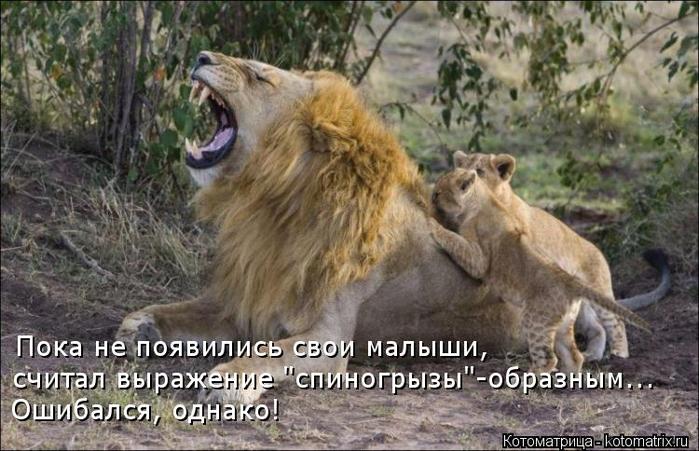 kotomatritsa_k1 (700x451, 351Kb)