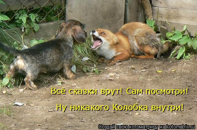 kotomatritsa_MB (640x425, 262Kb)