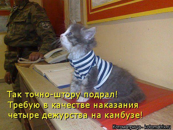 kotomatritsa_qI (604x453, 263Kb)