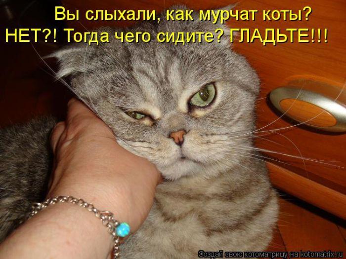 kotomatritsyi_(1_iz_49_foto) (700x525, 268Kb)