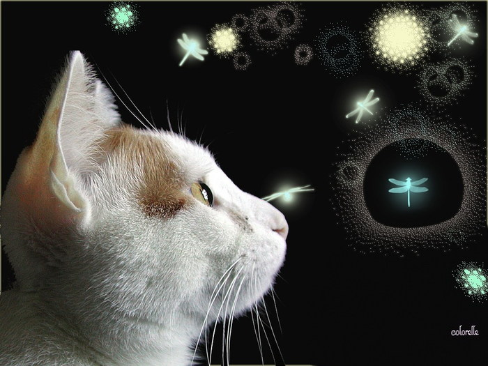2714816_wallpapers_cats_220 (700x525, 97Kb)