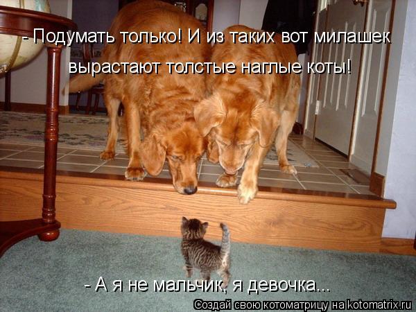 kotomatritsa_- (600x450, 219Kb)